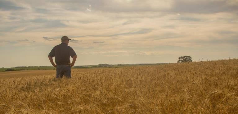 Farmer standing in a field of golden wheat