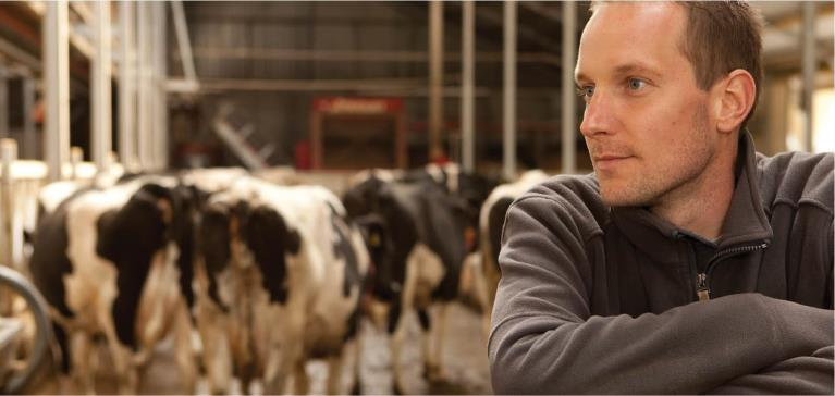 dairy farmer in front of cows