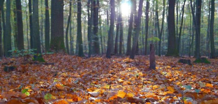 Ground view of the floor of a forest in fall with orange and red leaves on the floor