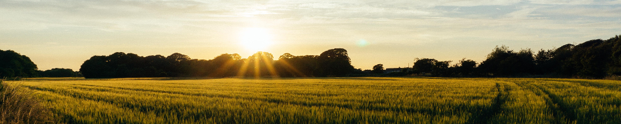 Sunset with large field and tree line on horizon