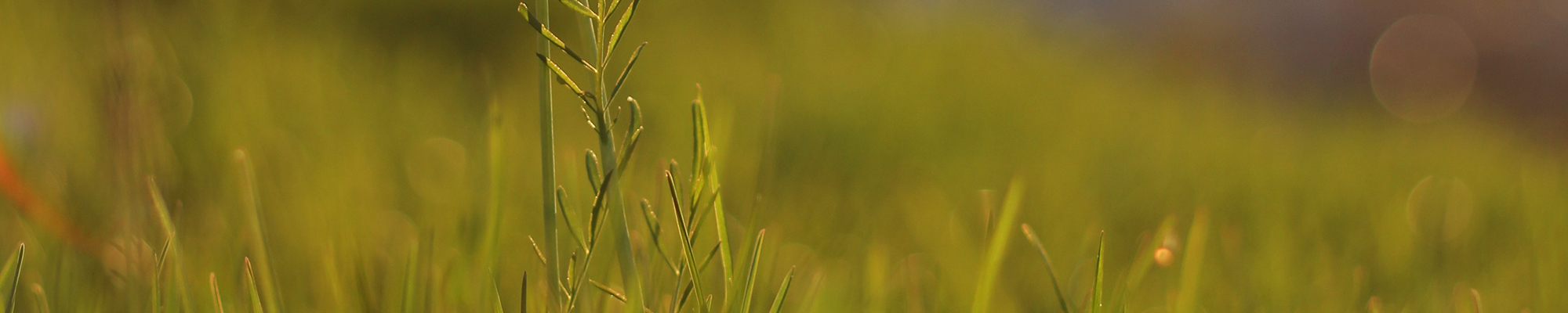 Close up of grass in a field