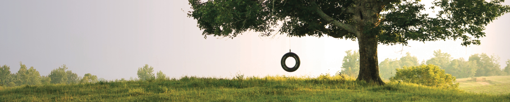 Empty tire swing in a large tree in a field